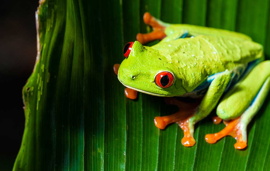 Key Essentials To Red Eyed Tree Frog Tank Setup