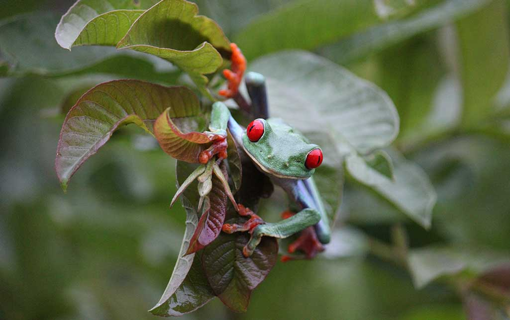 Red Eyed Tree Frog Supplies For A Healthy Environment