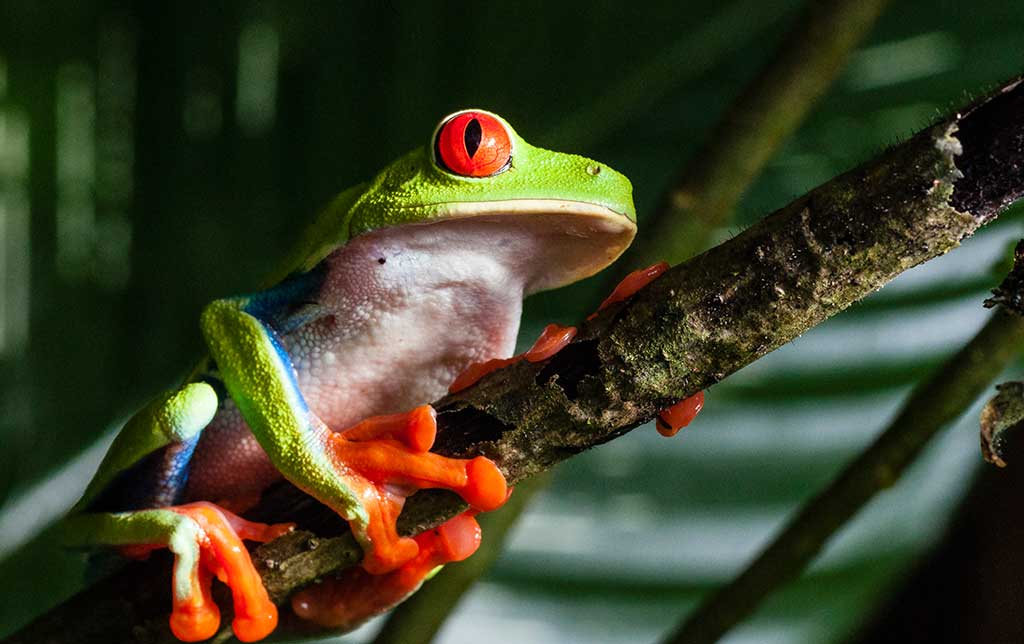 wonders of frogs A parable of two frogs author unknown the weary frog jumped harder and harder and, wonders of wonders, finally leaped so high that he sprang from the pit.