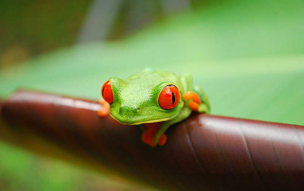 how to take care of a baby green tree frog